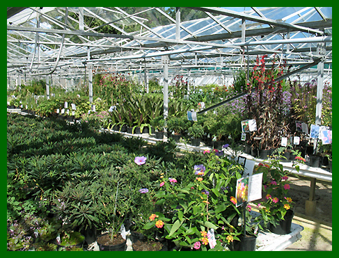 Euphorbia and Perennials
